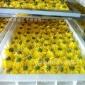 葡萄烘干机 葡萄干烘干设备 葡萄脱水干燥箱 橙子烘干机生产厂家